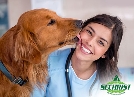 Benefits Of Injury Recovery With Hyperbaric therapy for Pets