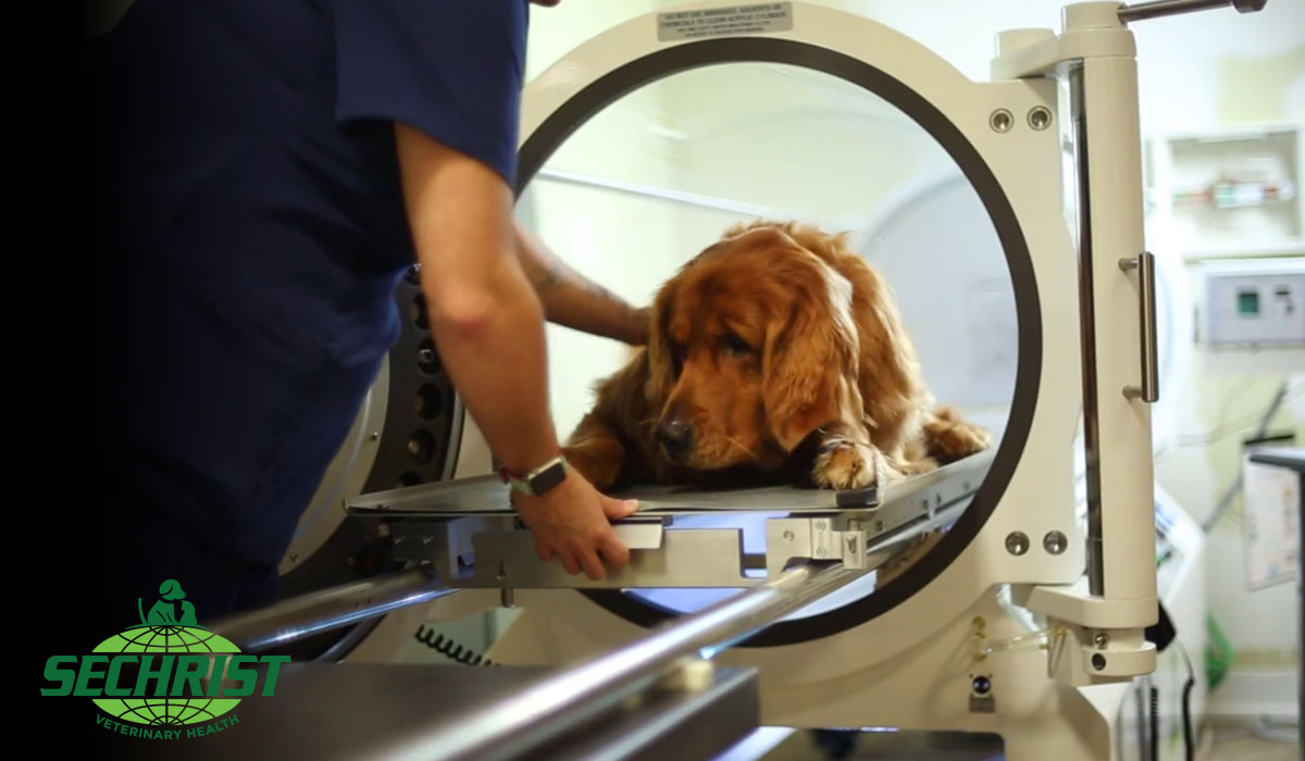 Dog Hyperbaric Oxygen Treatments