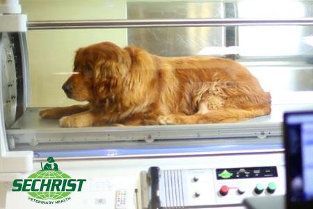 Dog inside Hyperbaric Chamber