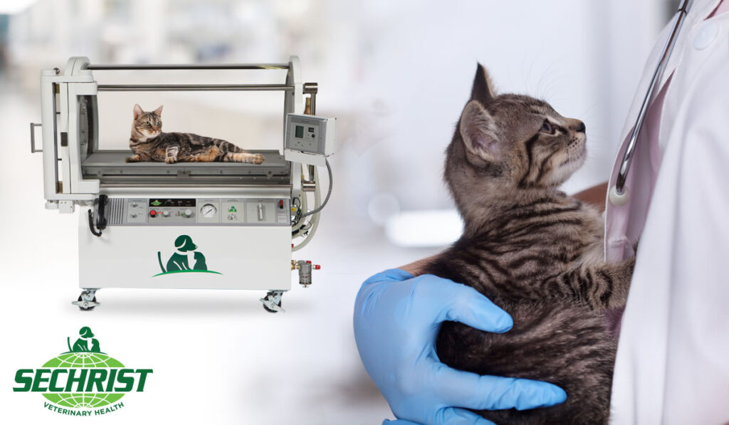 Enhancing Post Surgical Treatment & Care with HBOT for Cats