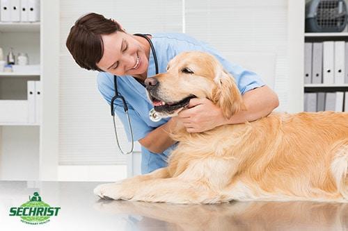 Ensure Your Pet has the Best Treatment