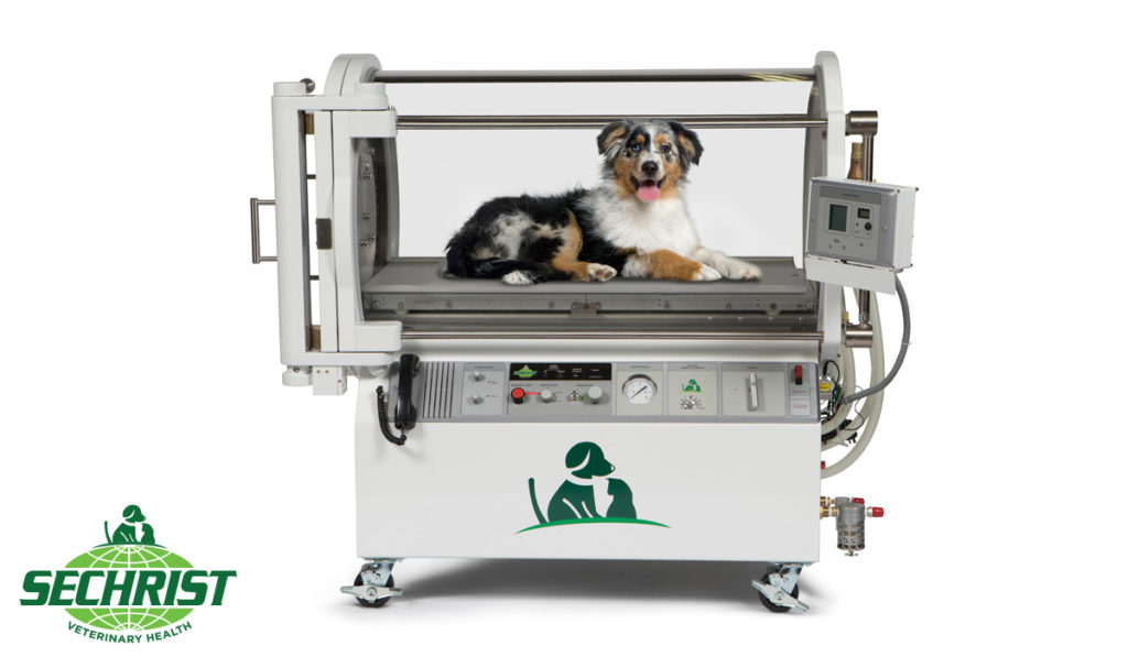 HBOT for Pets