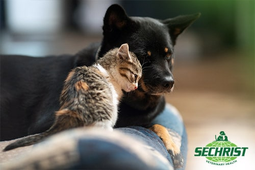 Healing for all Animal Sizes