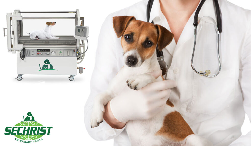 Holistic HBOT Treatment for Pets