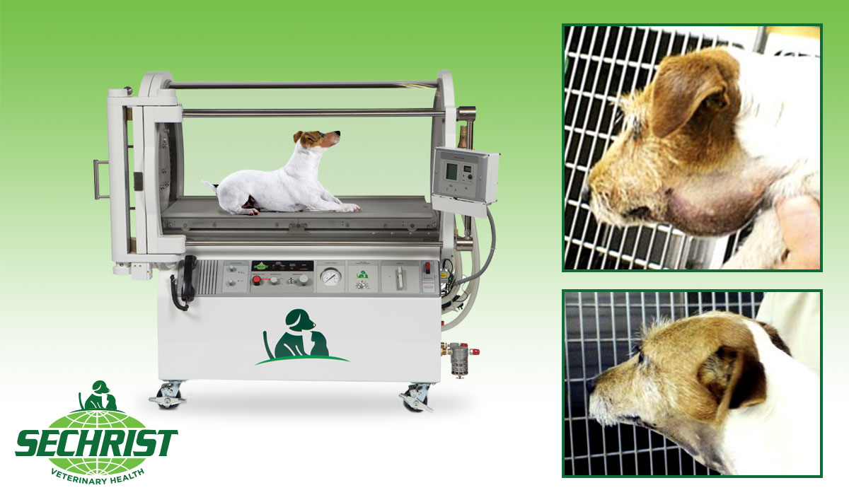 How Hyperbarics is Saving Pets