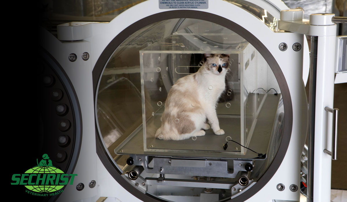 Hyperbaric Animal Chamber-Treatment and Training