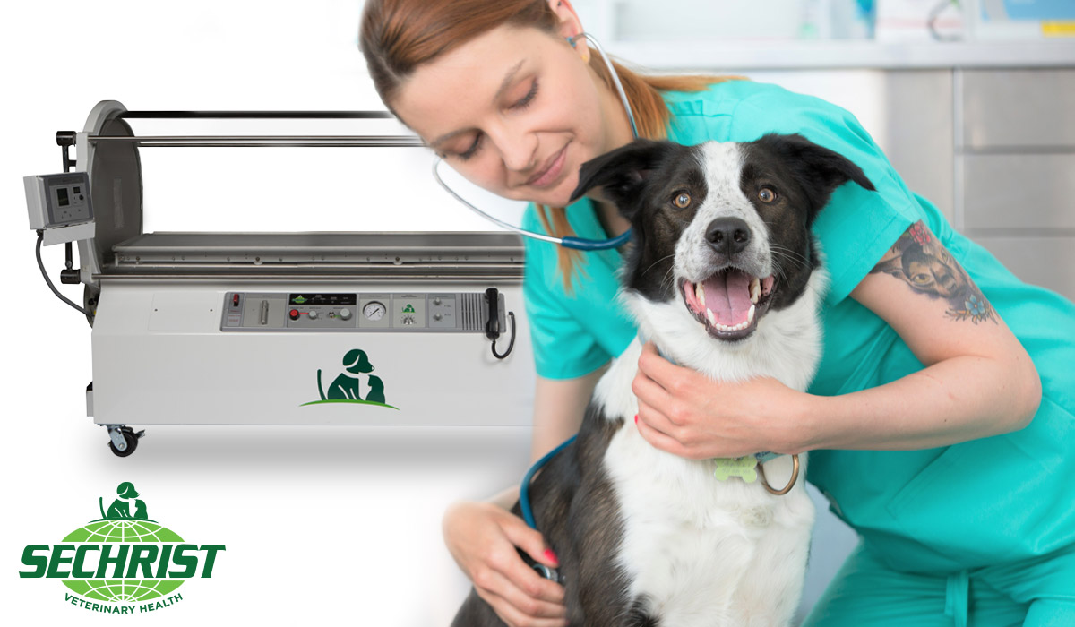Hyperbaric Oxygen Therapy and Veterinary Medicine