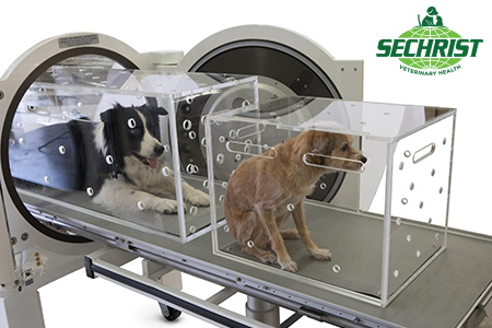 Hyperbaric Treatment for Animals