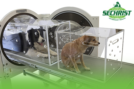 Hyperbaric Treatment for Pets Investment