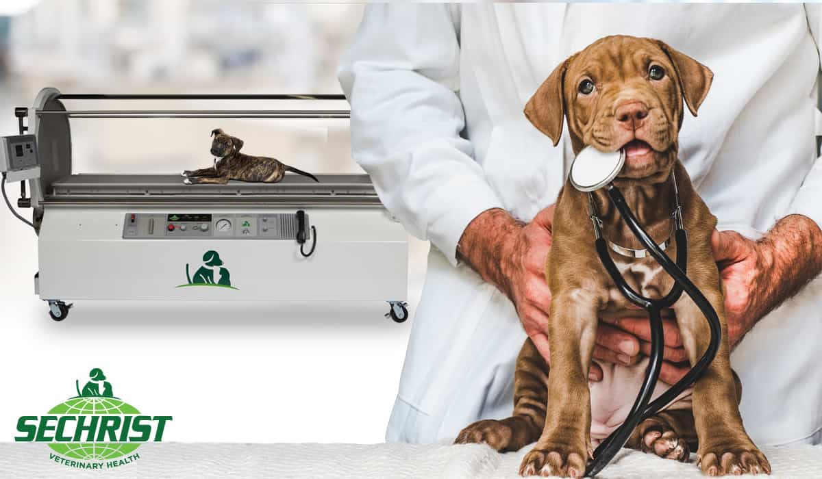 Offer Holistic Hyperbaric Oxygen Treatment for Pets