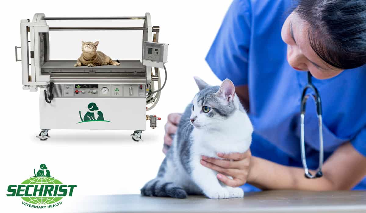 Oxygen Therapy for Pets