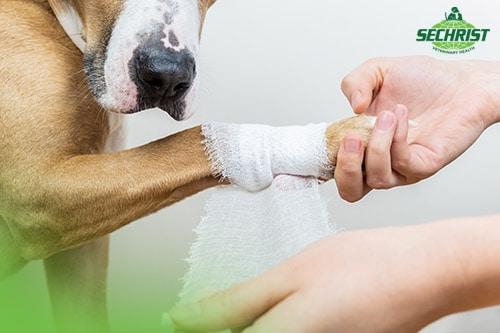 Pet Wound Healing Process