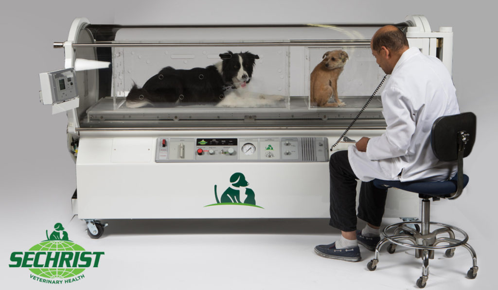 Veterinarians Need Hyperbaric Treatment