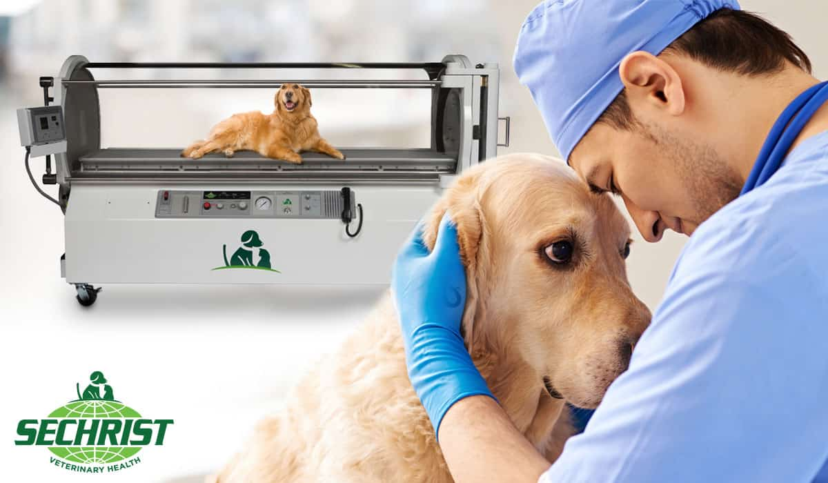 Veterinary HBOT for Trauma Related Cases in Animals