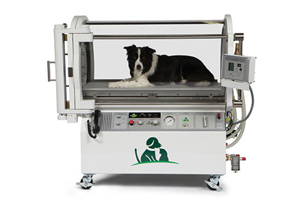 animal hyperbaric oxygen therapy