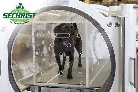 hyperbarics is saving pets